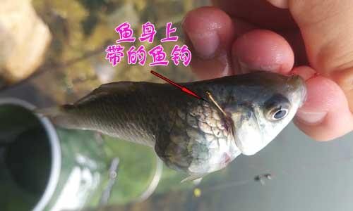 鱼身上的鱼钩.jpg